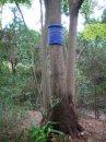 Tree hugger1