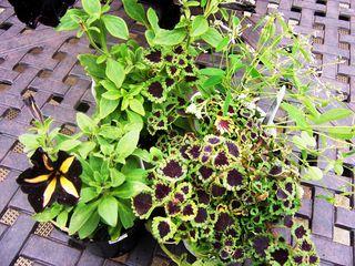 Creepy plant combo
