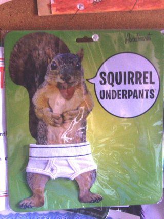 Squirrel trou